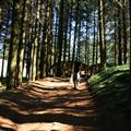 Walking through the woods to the entrance at Radicofani