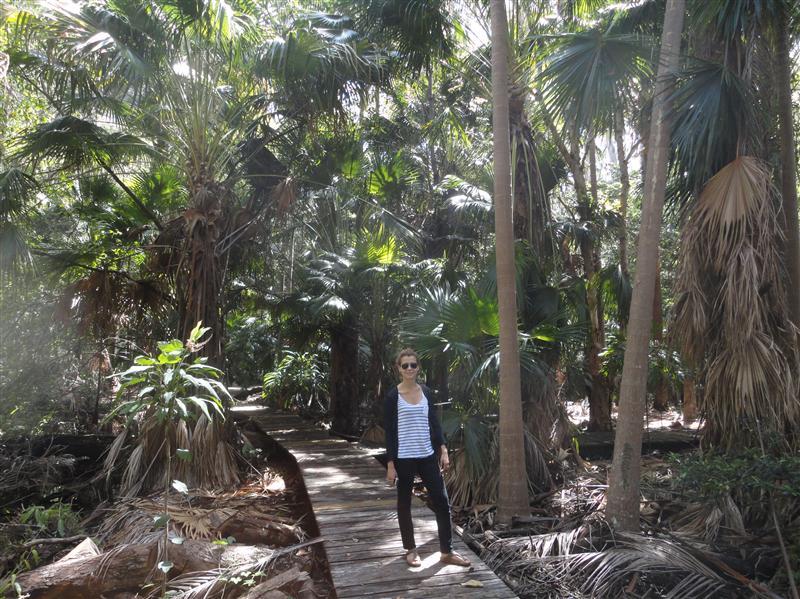 Botanic garden (rainforest)