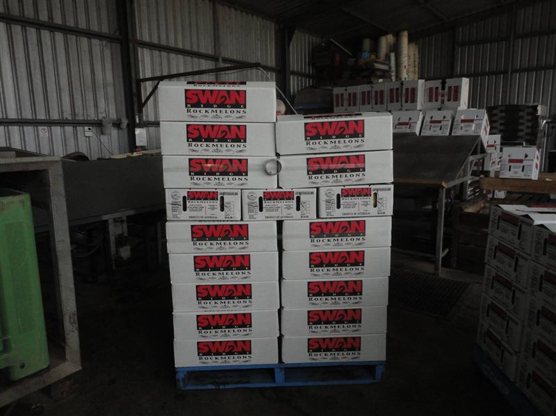Stacking rockmelons boxes