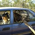 Collecting Firewood In A Sedan