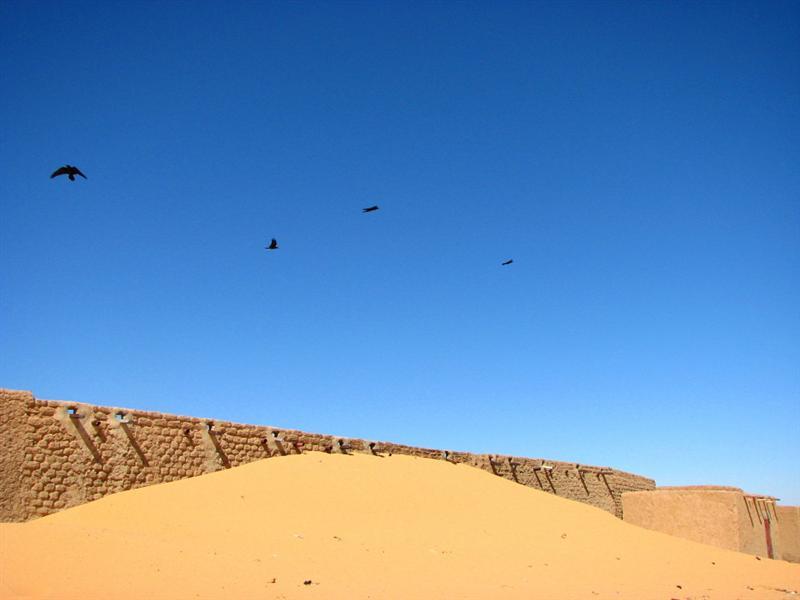 Birds over Assamakka