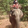 Joanne's elephant