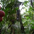 Big spider in the jungle
