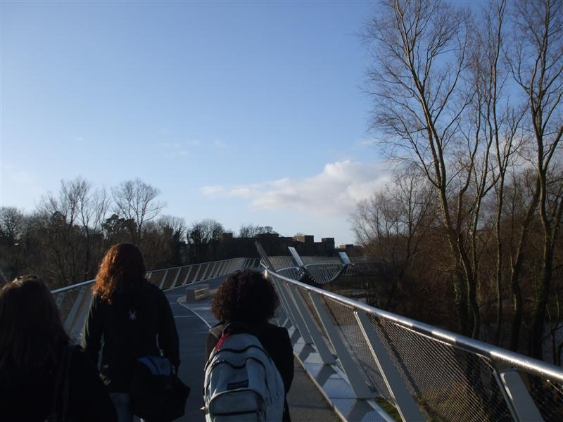More of the Living Bridge