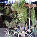 Chatuchak  Market Plants
