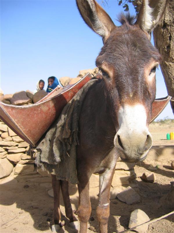 Me? Donkey