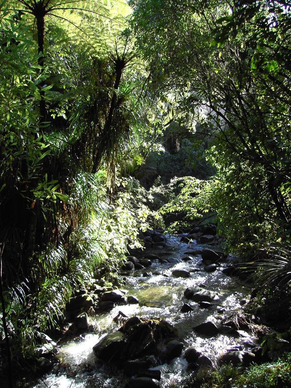 Rainforest - Morere
