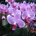 Orchids in the botanic gardens