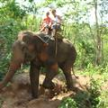 Elephant Camp - Chiang Mai