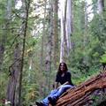 Debb sitting on a Redwood