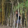 Brandon in the bamboo tree in Park Espana  in downtown San Jose