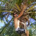 Ryan climbing palm tree for a coconut