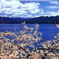 Spring in Lake Luguhu