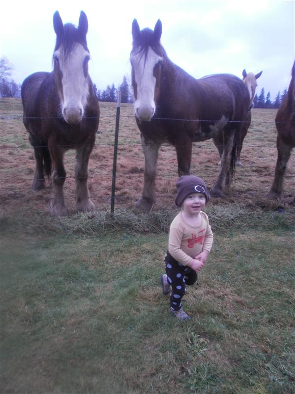 Baby Giant in front of some giant horses