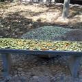 park bench last fall