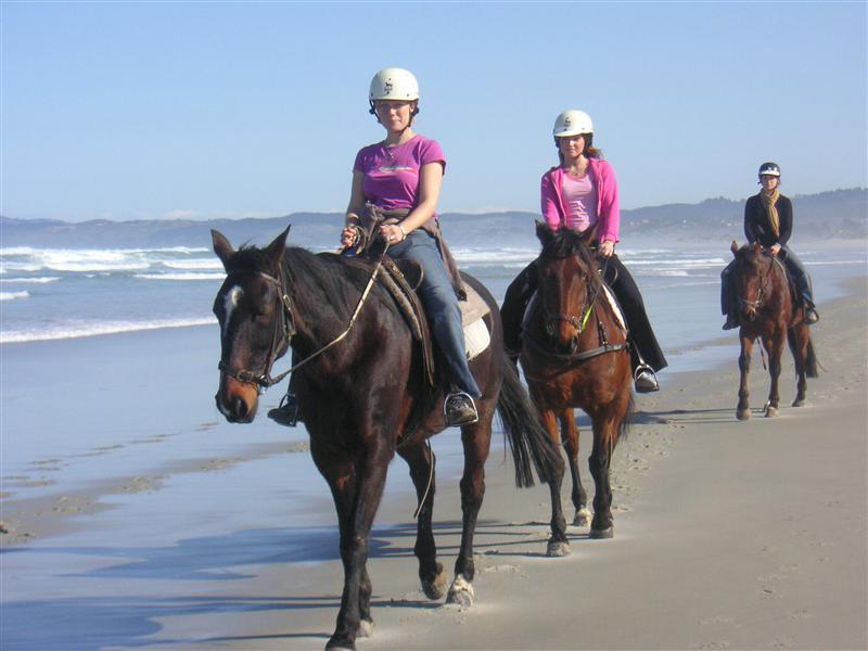 Horseriding in Dunedin