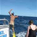 Swim with the Whalesharks at Ningaloo Reef