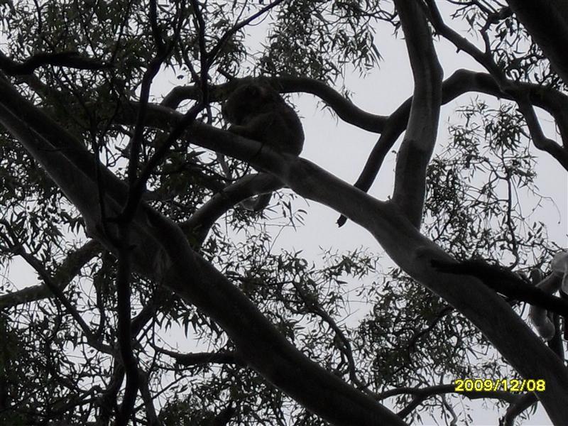 Photo from Melbourne, Australia