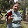 OZE 1 caravan park to look for Koalas found birds also