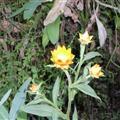 flora regrowth