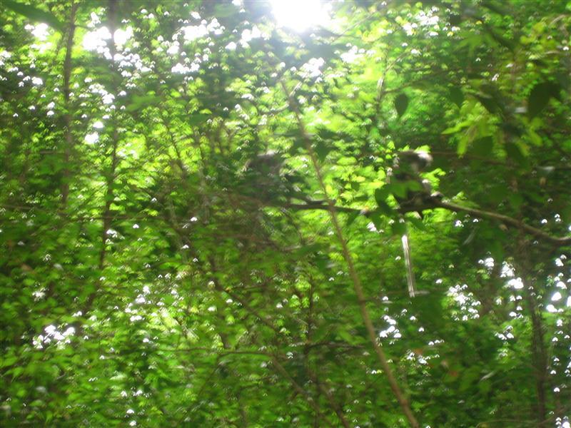 Monkeys near Wee's Present Wall